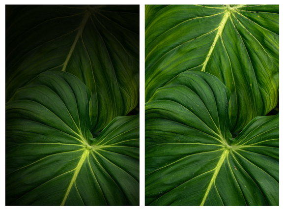 Edited leaves. Spot removal and spot light to highlight the veins in the bottom leaf.