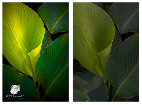 Underexposed palm leaves edited to exploit the available light. Two images, before and after.