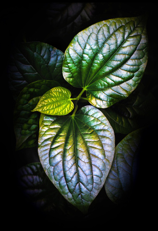 Dark botanical photography.